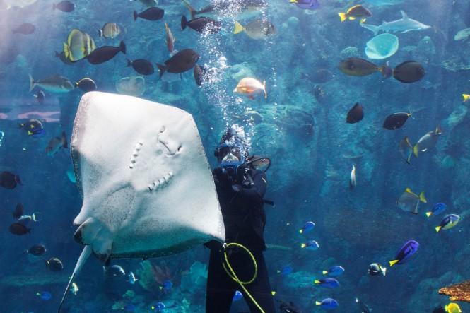 sting ray diver.jpg